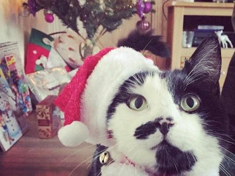 cat in a santa hat