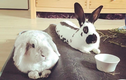 two cute rabbits